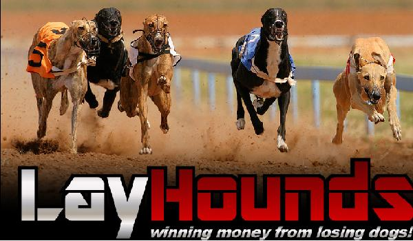 Lay Hounds Final Review